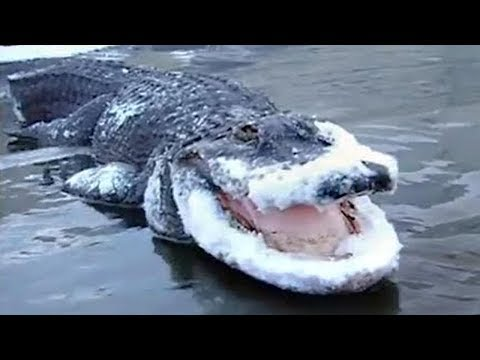 13 SHOCKING ANIMALS THAT WERE FROZEN IN ICE!