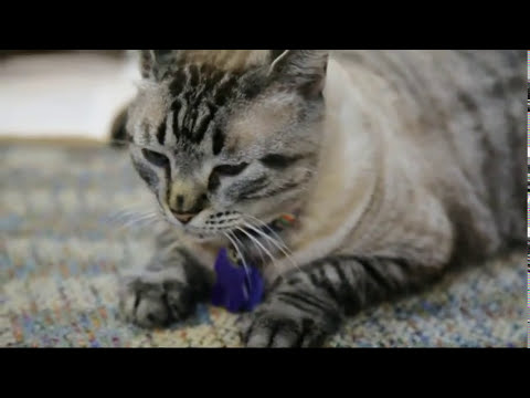 Evicted Cat May Get to Stay in Texas Library