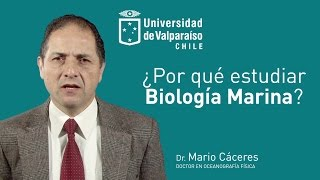 Por qué estudiar Biología Marina en la Universidad de Valparaíso