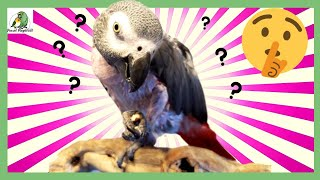 The Secret Life of Naked Parrots