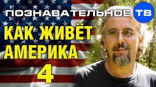 Как живёт Америка 4 (Познавательное ТВ, Максим Кузнецов)