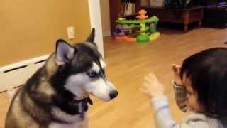 犬と戯れる世界の子どもたちのまとめです。