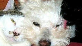 老猫の『タヒリア』と老犬の 『ジェメルダ』は、保護施設 「グンヤー・...