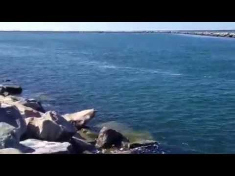 Striped bass fishing hot spot short wall galilee for Best striper fishing spot in ri