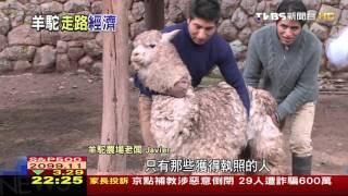 http://news.tvbs.com.tw/world/news-650415/ 在台灣被暱稱為「草泥馬」...