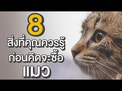 EP10 : 8 สิ่งที่คุณควรรู้ก่อนคิดจะเลี้ยงแมว