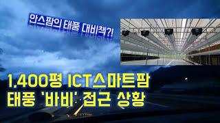 1,400평 ICT스마트팜 포천딸기힐링팜 태풍 바비 실…