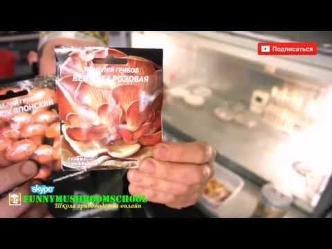 Купить семена почтой - лучшие цены в Украине (Киеве) ᐈ