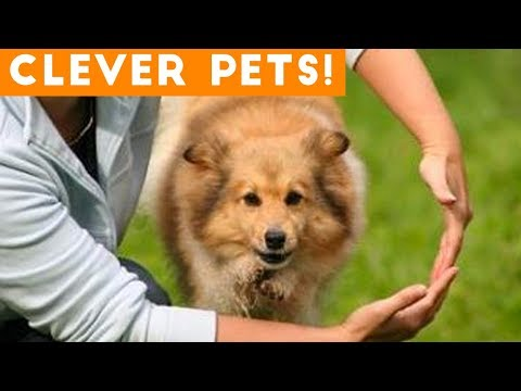 Ultimate Smart Animal Trick Compilation | Funny Pet Videos!