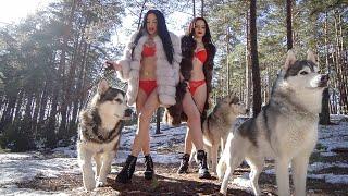 НОВЫЙ трейлер: собаки хаски и маламуты Майк, Рокки и Лекси