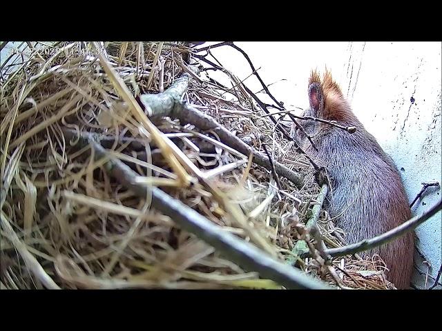 Unser Eichhörnchen atmet schwer!!! 24.02.21