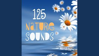 Sounds of the Ocean MP3 Track for Relaxation SPA