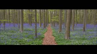 Relaxing Music for Meditation Yoga Sleep and Stress Relief