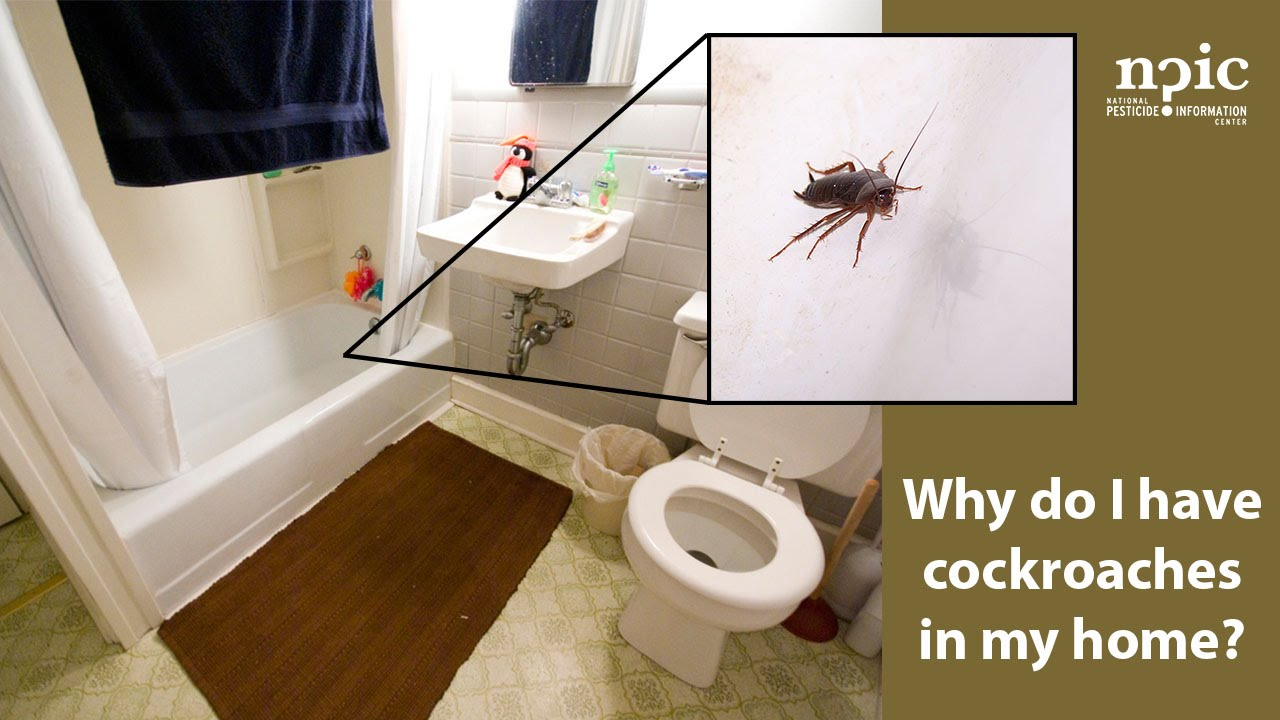 why do i have cockroaches in my home? - youtube