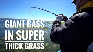 GIANT BASS In Super Thick Grass - BEST DAY OF THE YEAR!!!