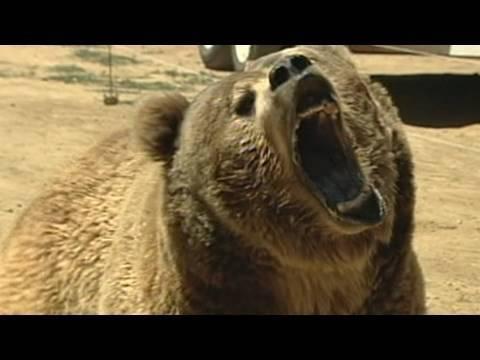 911: Deadly Bear