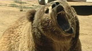 911: Deadly Bear Attack