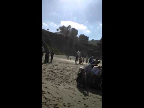 Sea Lion release Pacific Marine Mammel Center 8/14