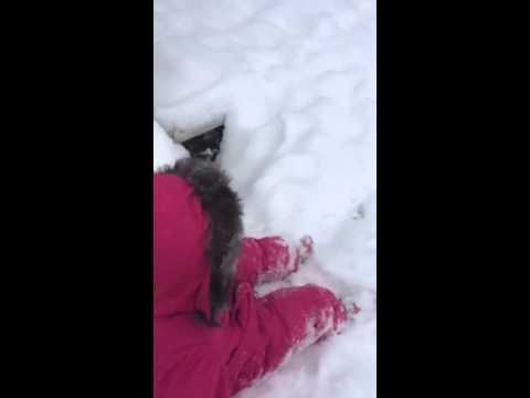 Ella in snow suit in snow. Wampa somehow hurt himself
