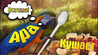 Говорящий попугай завтракает! говорит Апчхи! (видео прикольного попугая - Ара) talking parrot -Ara