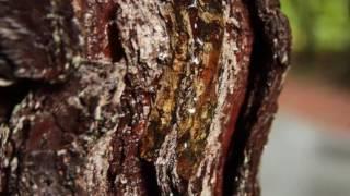 видео Как отстирать смолу с ткани в домашних условиях