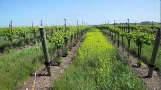 Tolosa Winery - San Luis Obispo, California