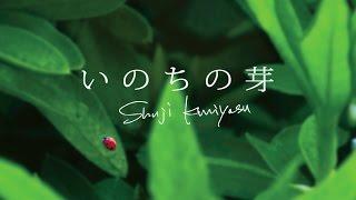 国安修二 『いのちの芽』 thumbnail