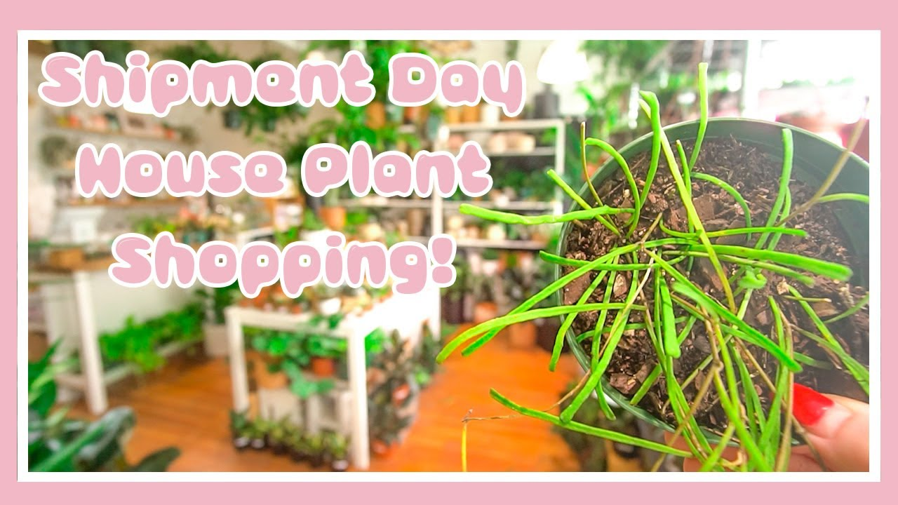 Download AMAZING Plants! Shipment Day Plant Shopping + Haul! Let's Go House Plant Shopping!