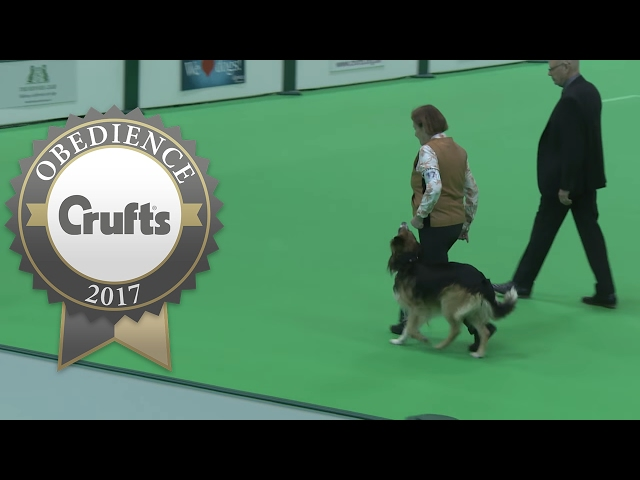 Obedience Championship - Dogs - Part 9 | Crufts 2017