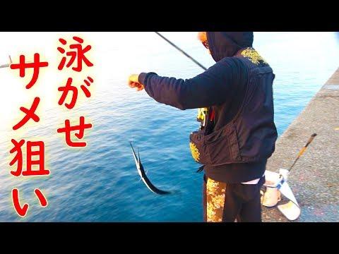 サメ被害多発の那覇一文字でサメ狙い!