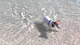 気持よーく泳いだり、カニを探したり 海が大好き。 でもボールがとれない.