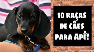 Top 10 melhores raças de cães para apartamento