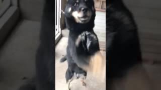 熊犬舎さんの犬達は人なっこいです.