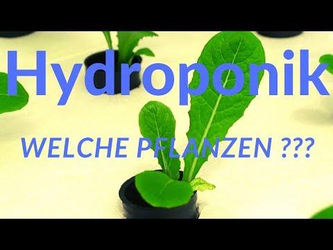 Hydroponik |  Welche Pflanzen ?