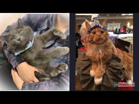 CFF Cat Show June 2019
