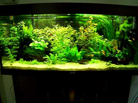 240 liter aquarium youtube. Black Bedroom Furniture Sets. Home Design Ideas