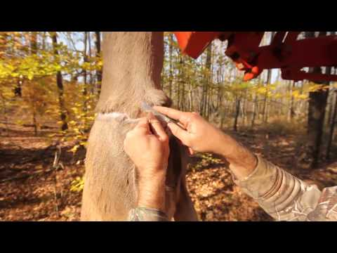 How To Skin A Deer