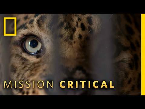 A True Man-Eater | Mission Critical