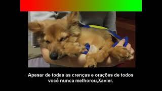 ELE SÓ QUERIA MORRER DIGNAMENTE 3:Uma Carta Para o pequeno Xavier.