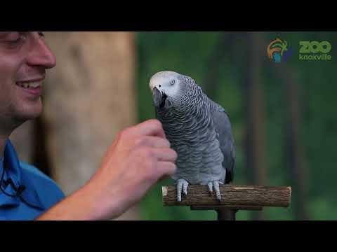 Watch Einstein the parrot do hilarious impressions (VIDEO)