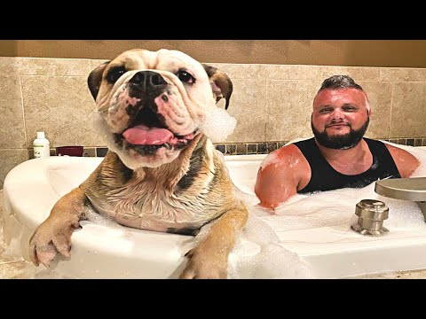 CUTE DOG TAKES A BUBBLE BATH! LOLA The Bulldog