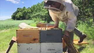 Tips to a big honey crop