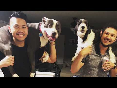 Tibetan Terrier 1 year with Rupert