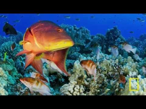National Geographic Live!   Enric Sala  Journey to the Pitcairn Islands