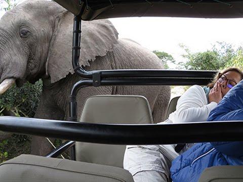 2017/04 SOUTH AFRICA - Isimangaliso Wetlands - Kosi Bay - Tembe Elephant Park