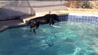 Go Pro Hero 3 Black mounted on a Black Labrador whilst diving and playing in the pool