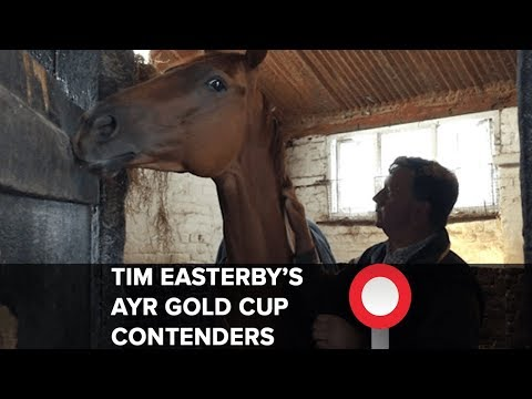 Tim Easterby on Ayr Gold Cup hopefuls Staxton, Flying Pursuit and Golden Apollo