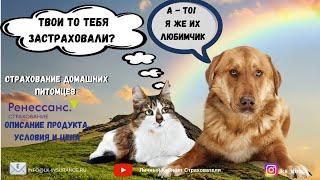 Страхование домашних животных кошек и собак (15.11.2019) часть 1 - кратко...