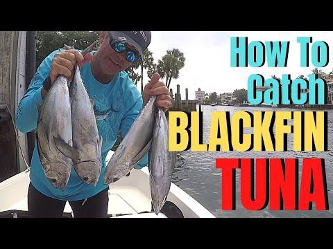 BLACKFIN TUNA Fishing | How To Catch Tuna Fish