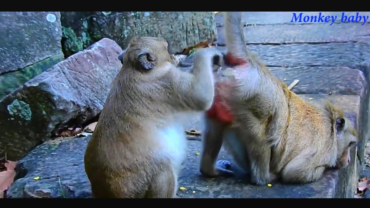 Cute Baby Monkey -  Monkey Videos compilation 2020 #1